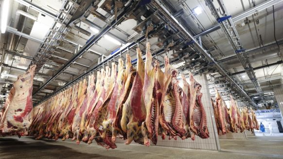 The ranking of cattle slaughterers is led by Vion Food Germany. In 2019, the processor slaughtered 725,000 animals; in 2018, 750,000 cattle passed through the slaughter line.
