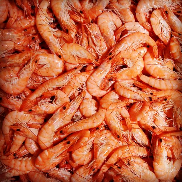 Most shrimp farms were found to be feeding antibiotics.