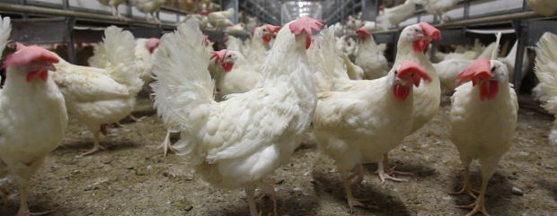This acquisition strengthens Cargills global poultry footprint.