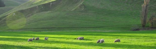 The outlook for New Zealand's sheep and beef sector is positive.