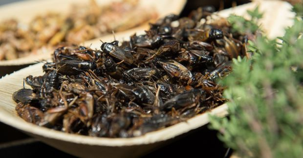 The BVE examines insects as an alternative and provides answers to consumer interest.