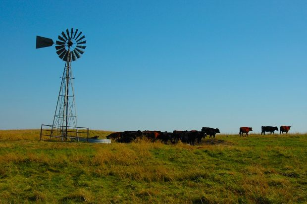 The National Cattlemen's Beef Association (NCBA) released its official Policy Priorities for 2019.