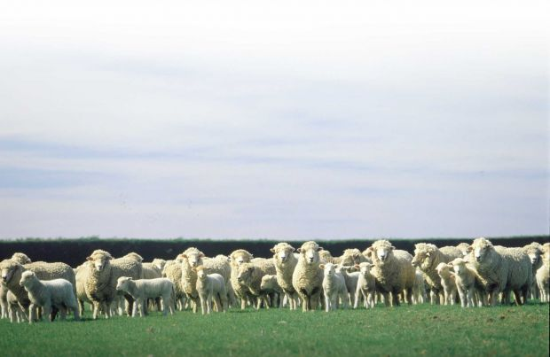 The Veterinary Agreement is key to New Zealand's sheep and beef exports to Europe as it establishes the principle of equivalence of sanitary measures and has reduced many potential trade irritants.