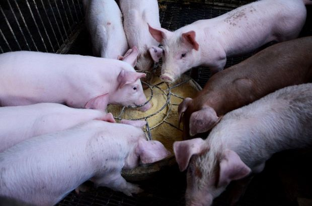 Almost 13 years ago, the feeding of food waste was banned throughout the EU in order to prevent the spread of classical swine fever, which is now more than relevant with ASF.