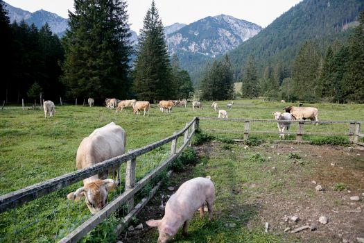 Animal welfare activists particularly emphasised the high animal welfare ambitions in the farm animal sector in Sweden and Austria.