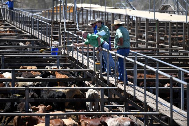 Drought in 2019 and 2020 has taken a toll on the cattle sector in Australia.