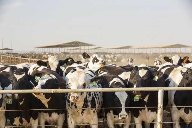 Dairy farmers in particular are suffering from the slowdown in sales of their products.