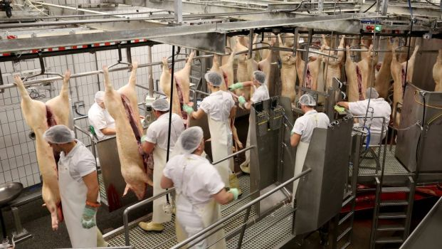 In a joint study the origins of the first SARS CoV-2 outbreak in May 2020 at Tönnies in Rheda-Wiedenbrück, the largest meat processing complex in Germany, were investigated.