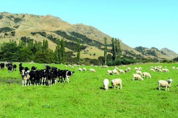 Greenhouse gas emissions from NZ's sheep and beef production have reduced by 30% since 1990.