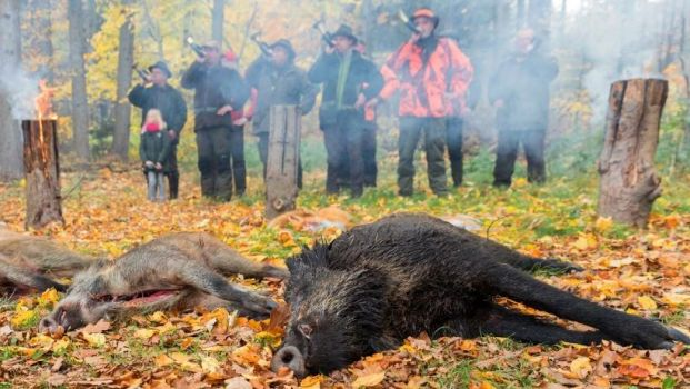 The hunting of wild boar is to be further facilitated.