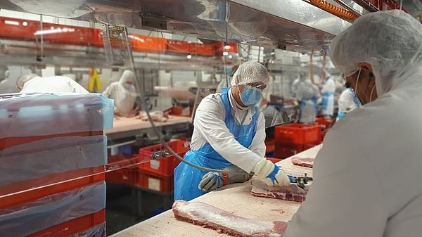 Higher capacities in the cutting room allow a larger number of pig slaughters.